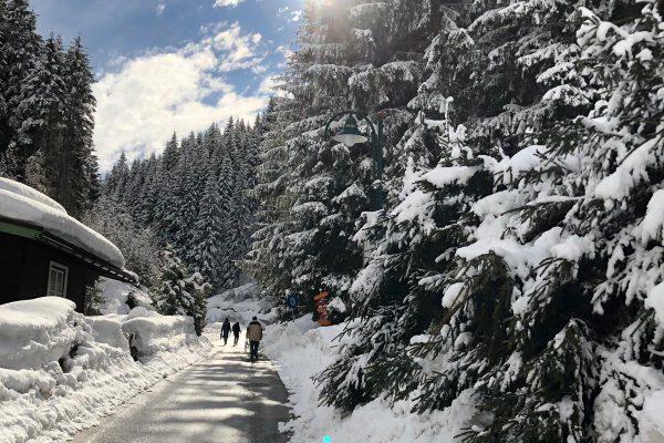 LUMICKS in the Snow (2019)